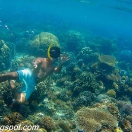 Corals in Big Lagoon